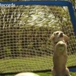 Dog_Breaks_Record