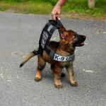 """""""Hoppics.com - Cute Pup In Vest"""""""