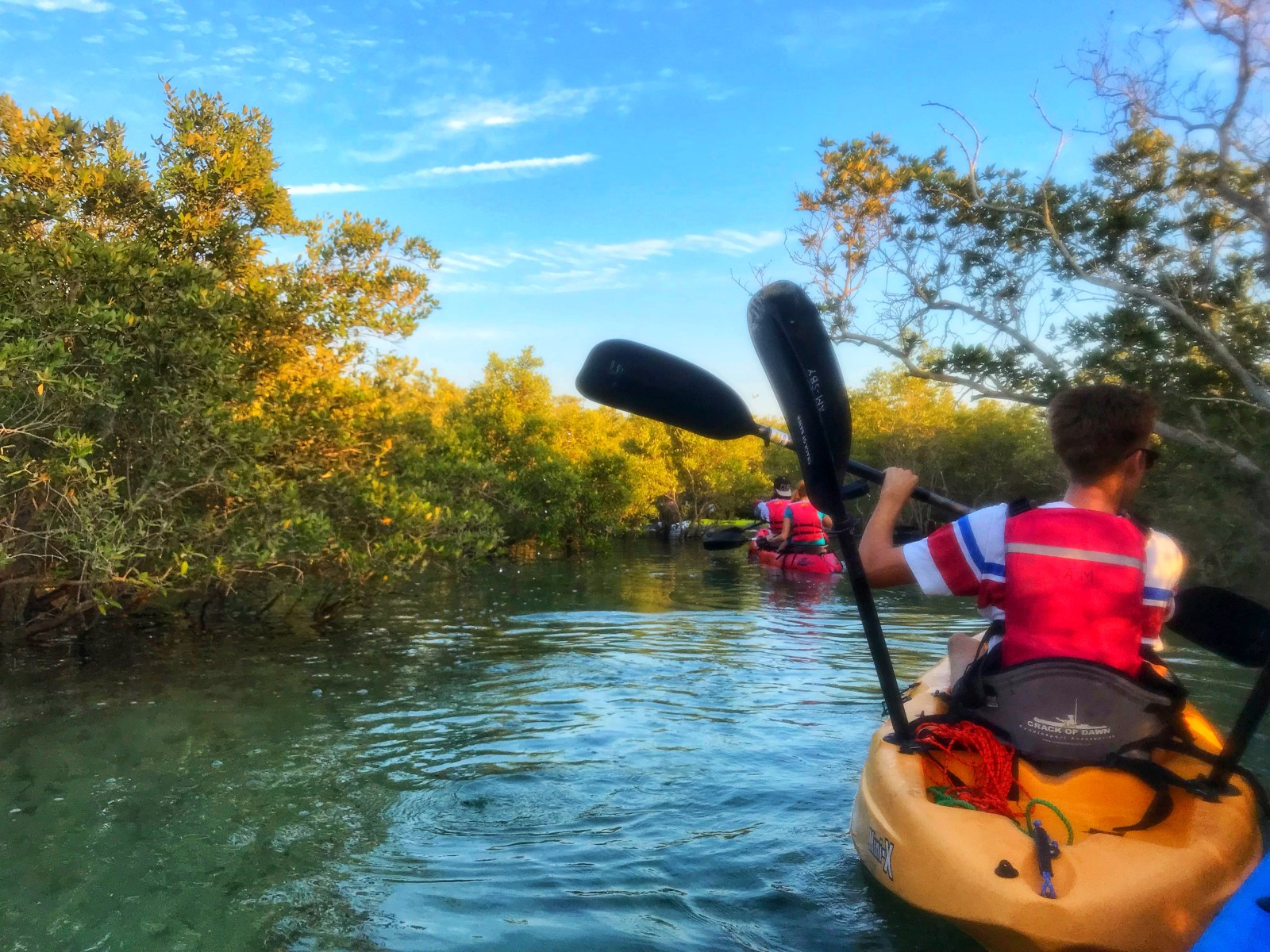 mangrove kayaking in abu dhabi