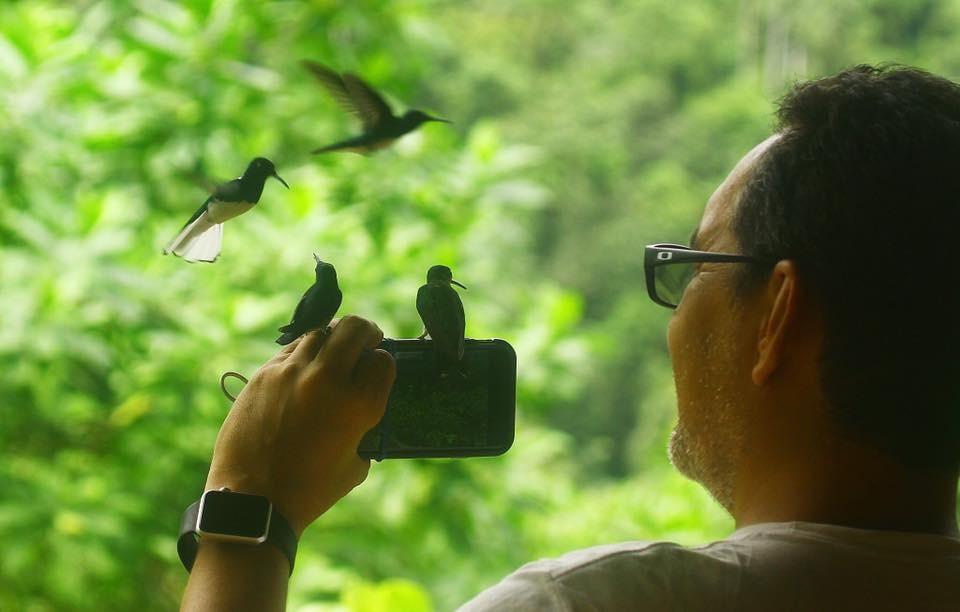 Existen 36 diferentes tipos de colibríes.