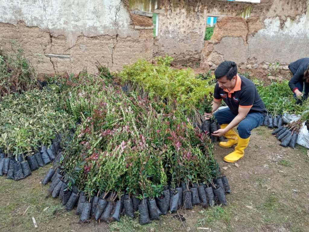 Las plantas se siembran en distintos sectores del cantón lojano.