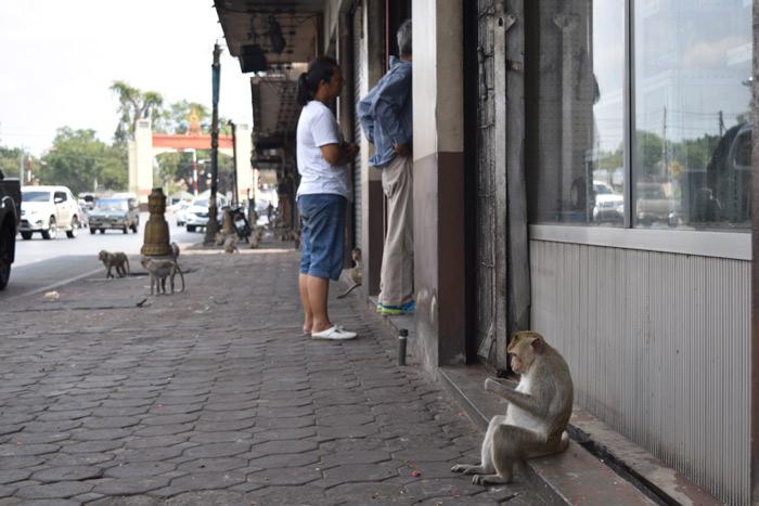 Imagen calle tailandia lopburi con monos