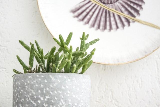 Décoration murale et mini cactus