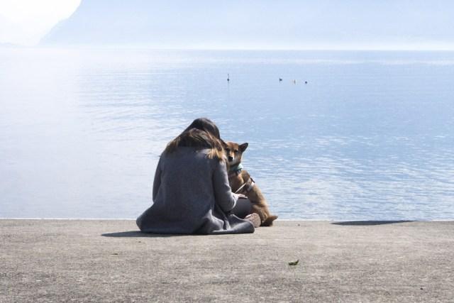Partir à l'étranger avec son chien