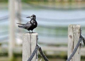 Bird at the Horicon Marsh