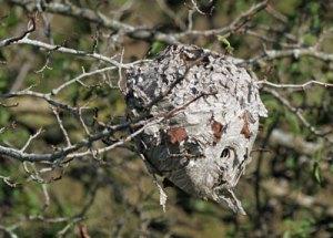 Hornet's Nest at the Horicon Marsh