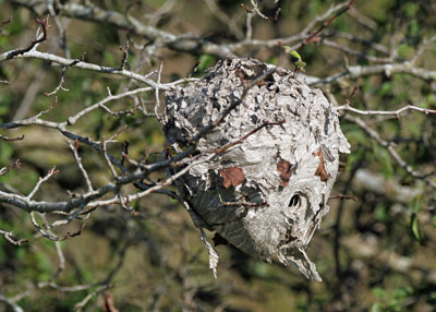 Hornet's Nest at the Horicon Marsh