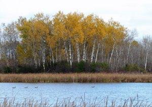 Autumn at the Horicon Marsh