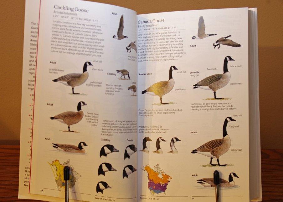 Sibley Birds East