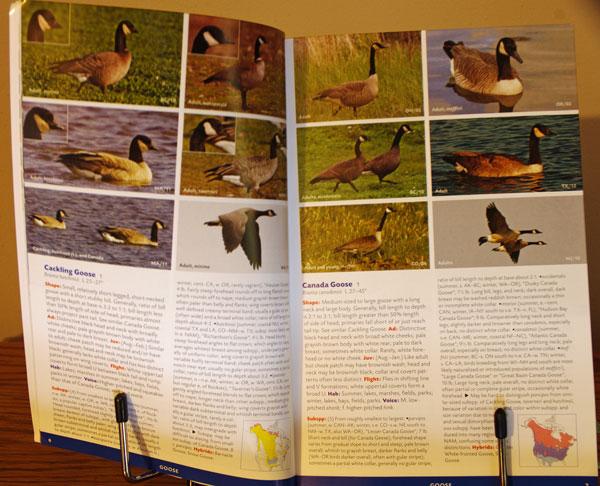 Stokes Field Guide to Birds: Eastern Region