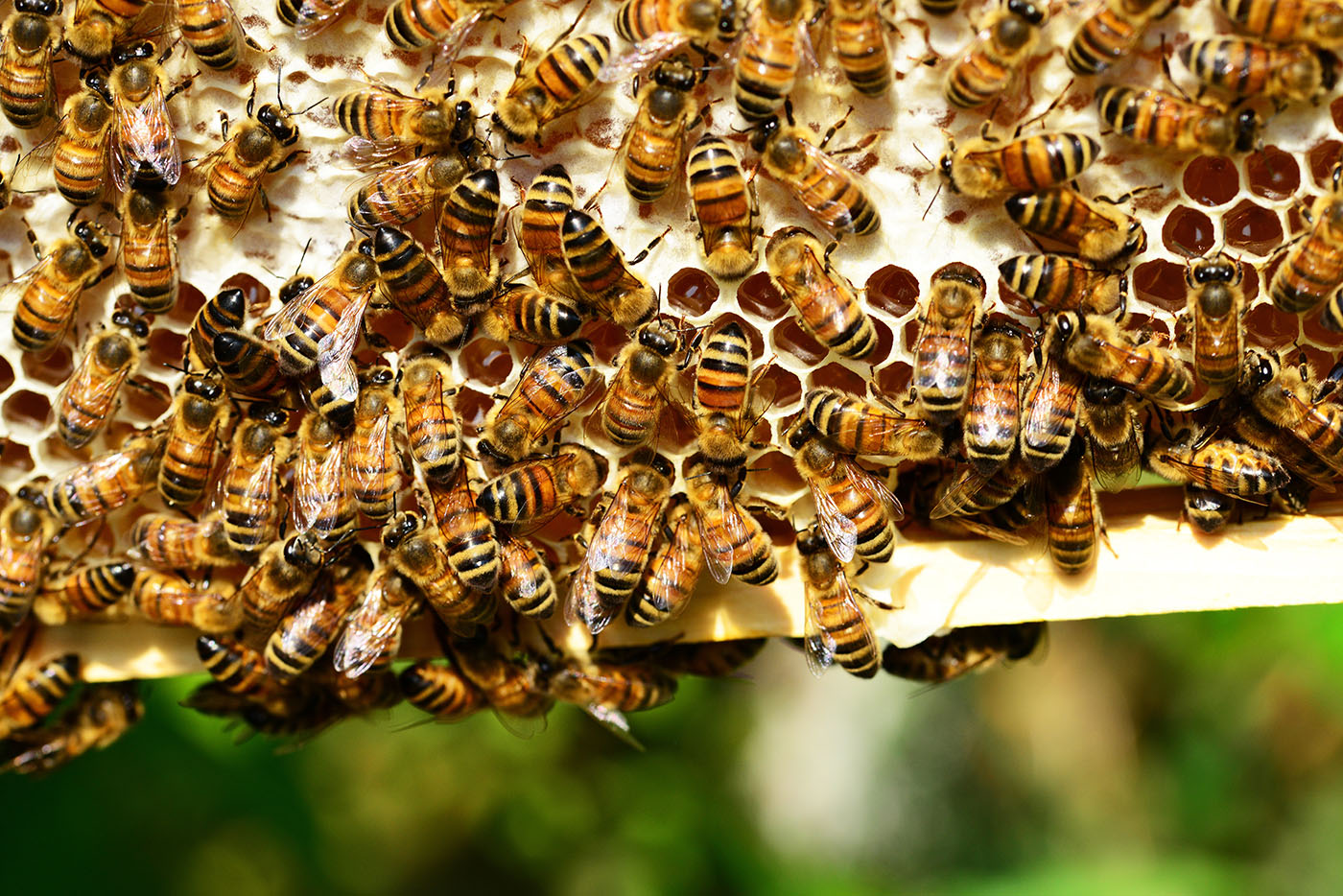 New technologies are being developed to protect beehives from theft, parasites and illnesses without the use of chemicals.