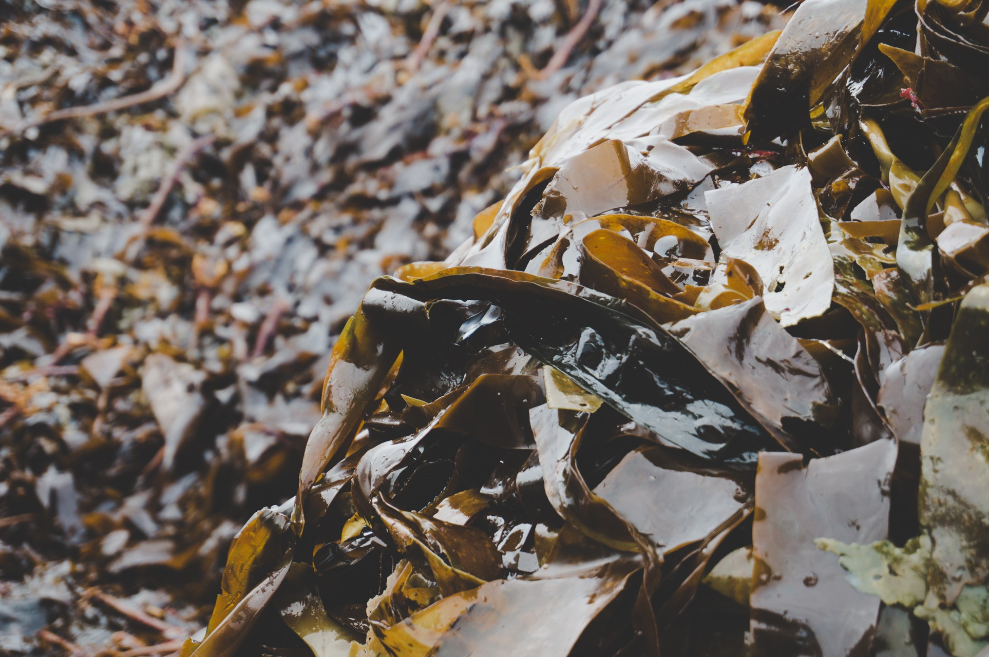 Image credit - Skipping Rocks Lab