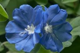 Blue Daze