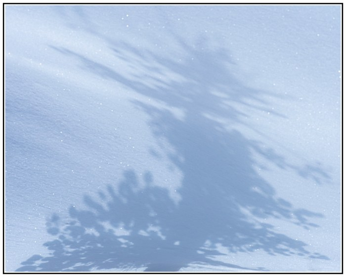 Tree shadows on snow in Bryce Canyon in Winter