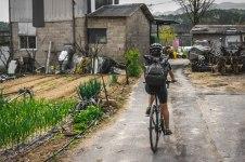 Riding through small farming roads and neighborhoods in rural Ulsan and Gyeongju.
