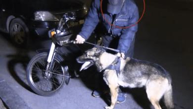 Photo of حالة الطوارئ.. حجز كلب مدرب بكازا أثناء الحملة الأمنية الليلية