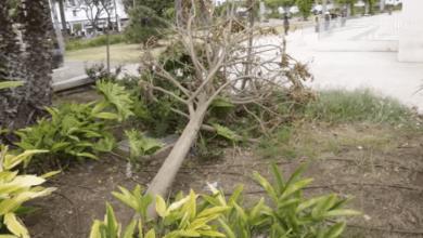 """صورة سقوط الأشجار بالدار البيضاء.. شاهد عيان: """"راه طاحت على سيد وديناه للمستعجلات"""""""