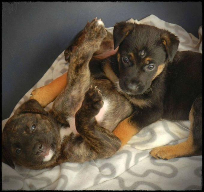 TRE cuccioline stupende di 2 mesi, in canile.