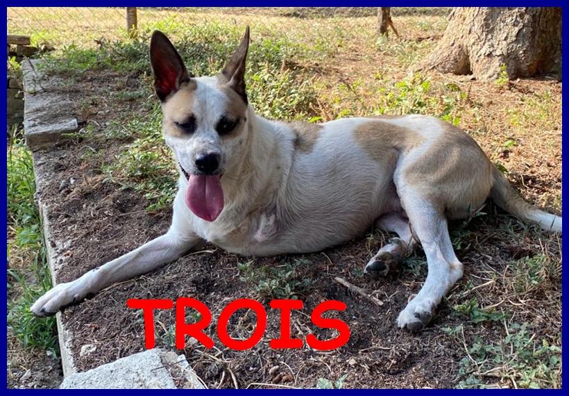 TROIS tripodino 5 anni giocoso e allegro cerca casa