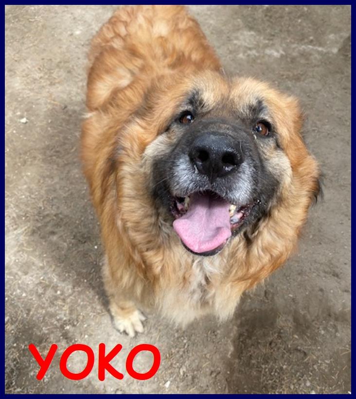 YOKO tenerissima orsacchiotta simil bovara 3 anni carattere meraviglioso