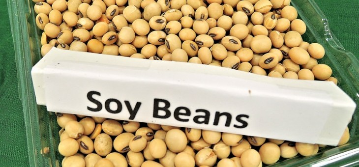 CAUTION!  Consume Soy at Your Own Risk