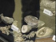 fossils at nhc