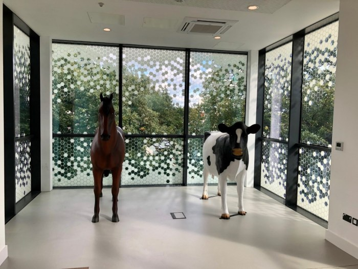 Life Size Horse Model and Cow Model at Harper & Keele University