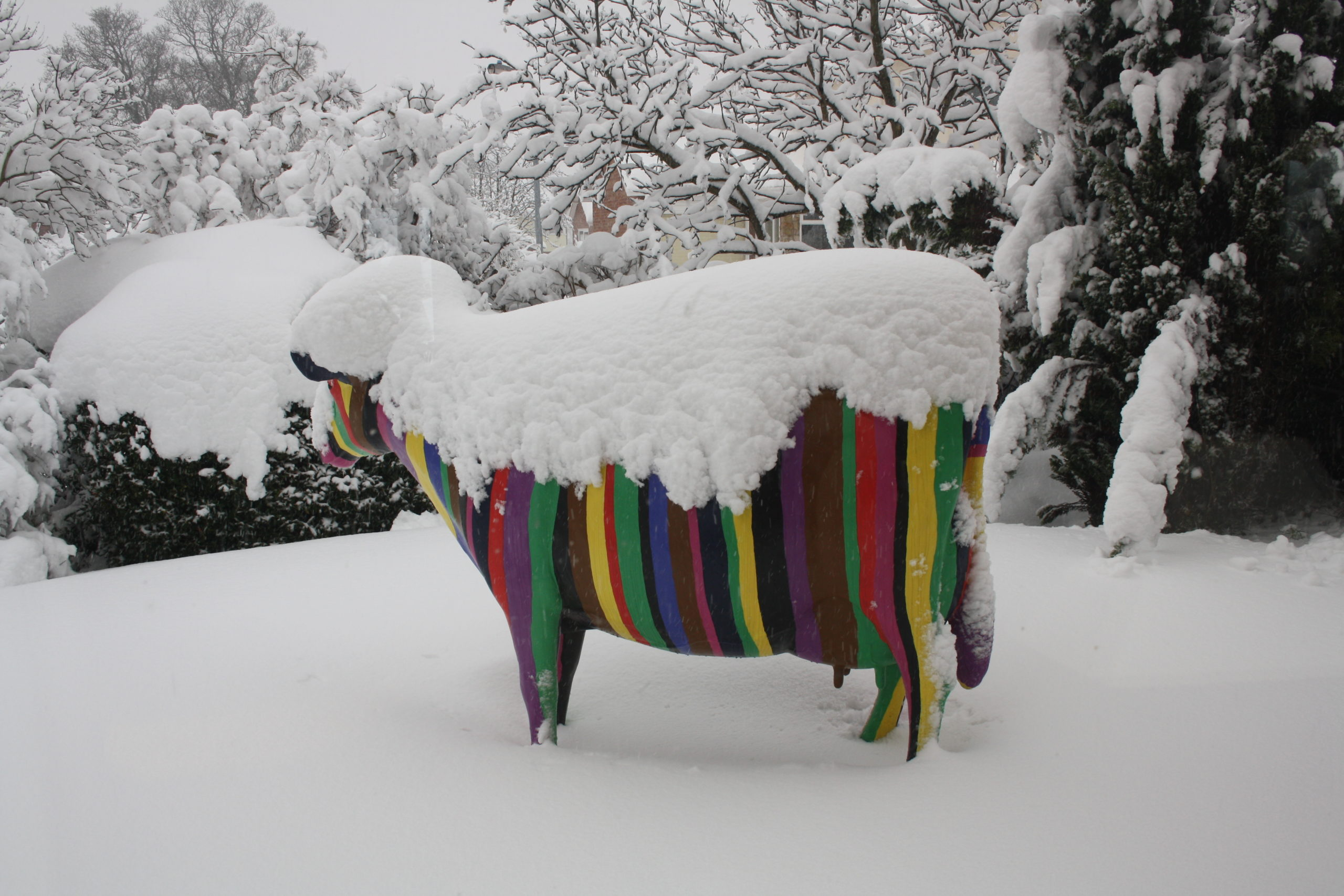Model Barcode Cow Deep in Snow