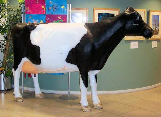 Standing Head Up Model Cow