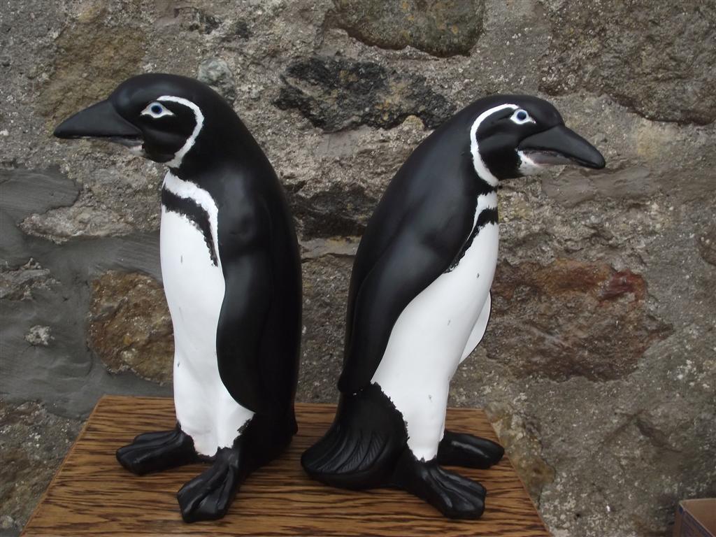 Galapogas Penguin Models