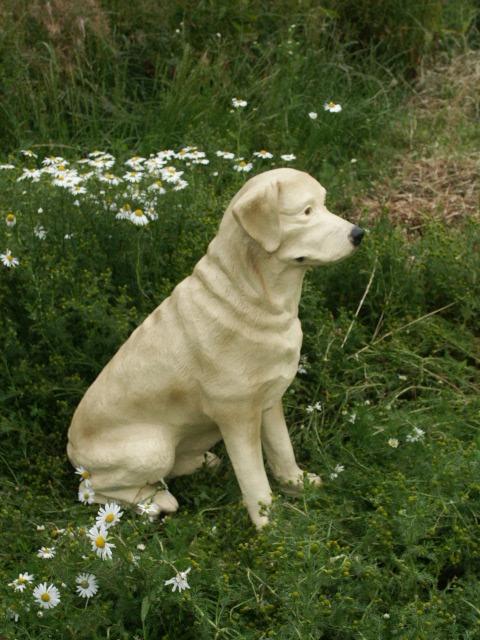 Golden Lab Dog Model Sitting