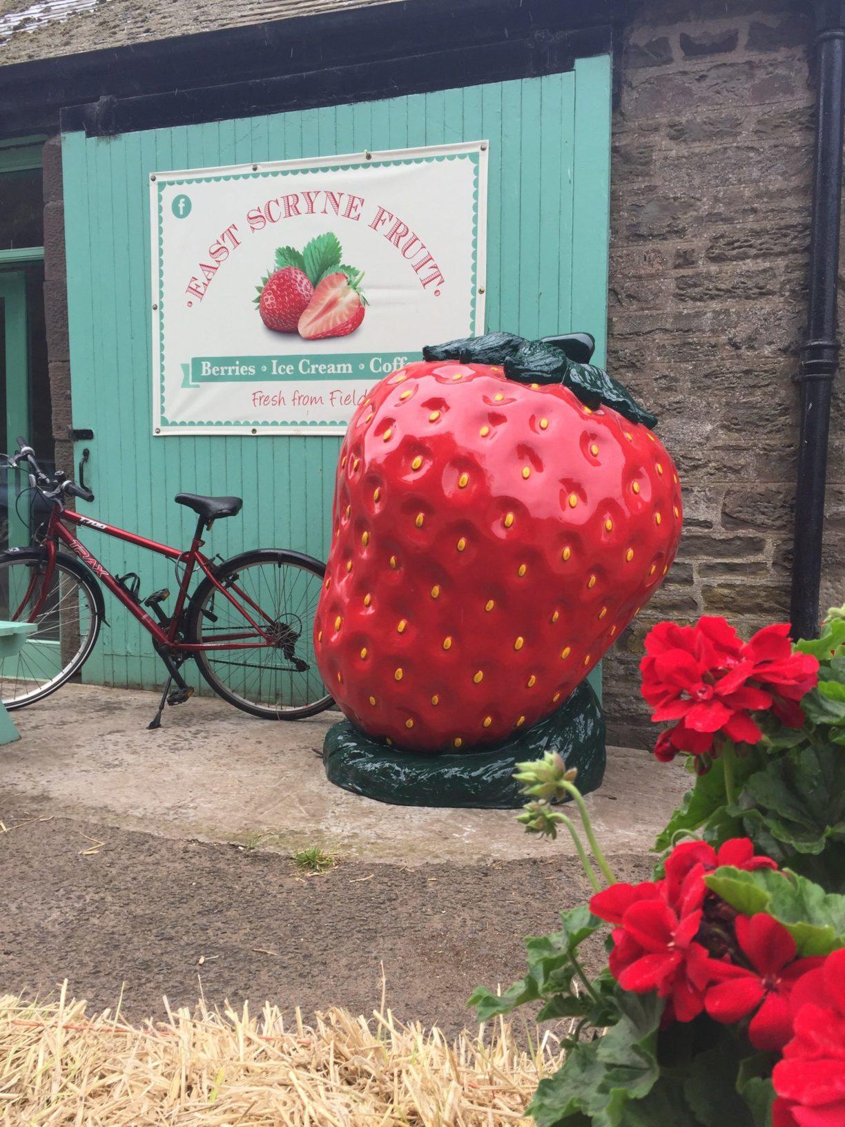 Giant Strawberry Fibreglass Model @ Farm Shop