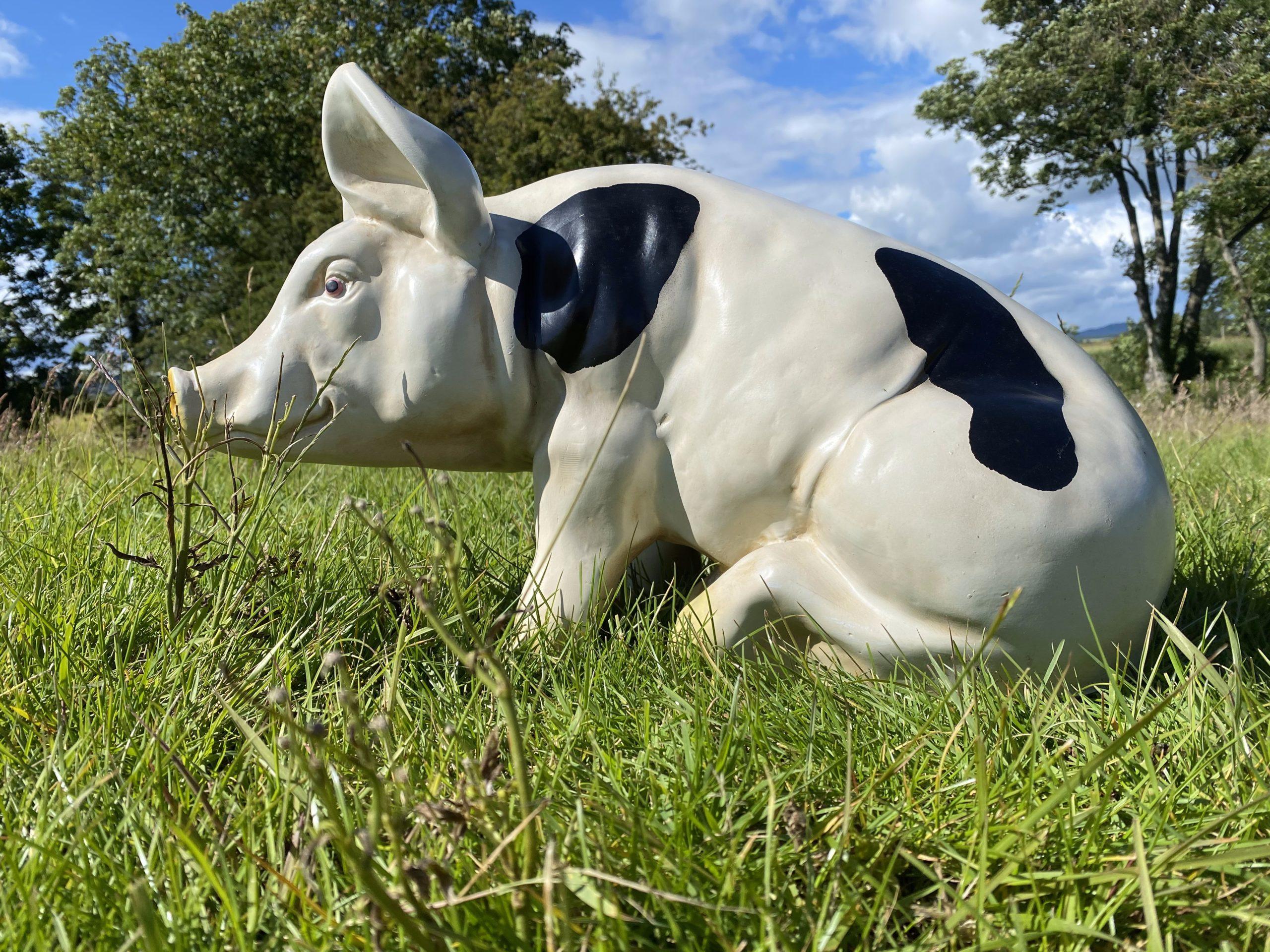3D Spotted Pig Model