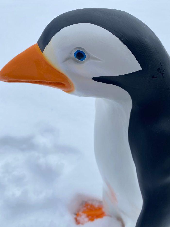 3D Medium Penguin Model