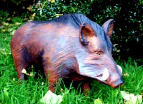 Male Warthog - Wild Boar - Wild Pig