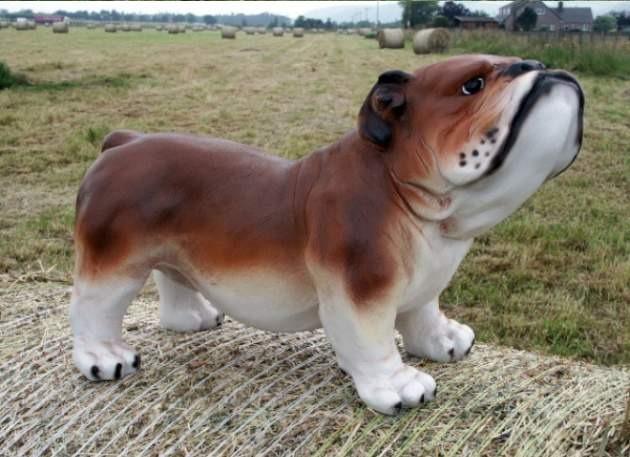 Life Size 3D Model British Bulldog