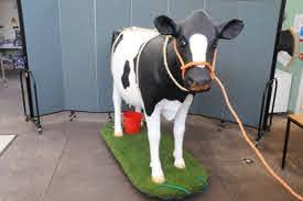 Bristol University Model Milking Cow
