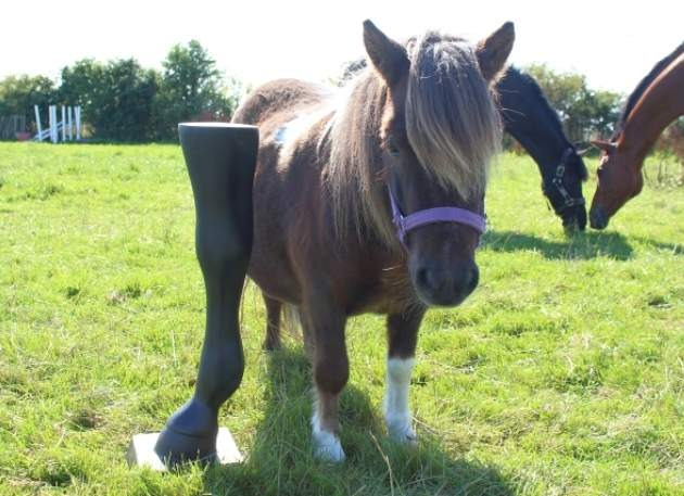 Model Horse Leg Display
