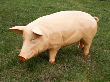 3D Life Size Sow Pig Model