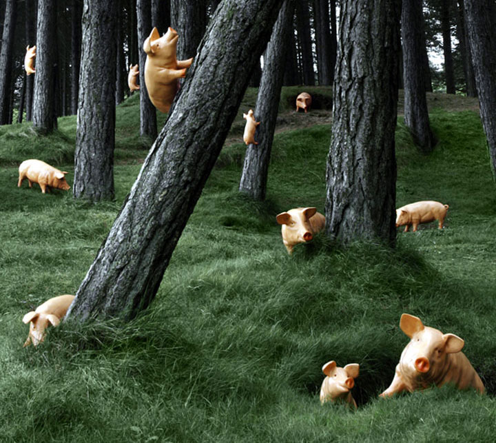 Model Piglets in the forest