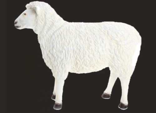 Life Size Model Facing Forward Sheep