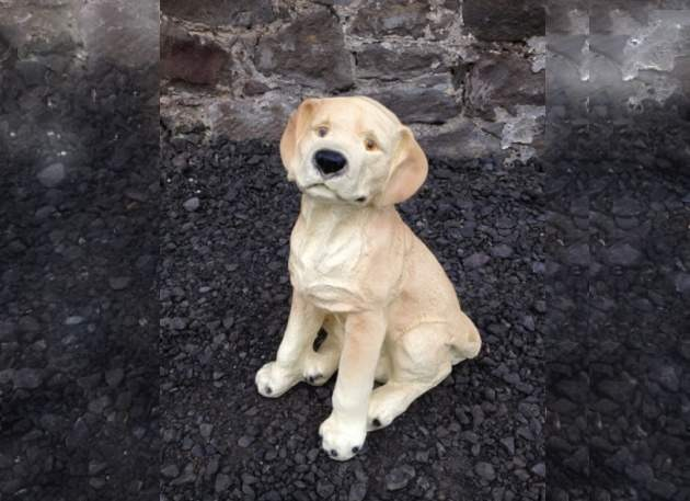 Labrador Puppy Dog Sitting Model