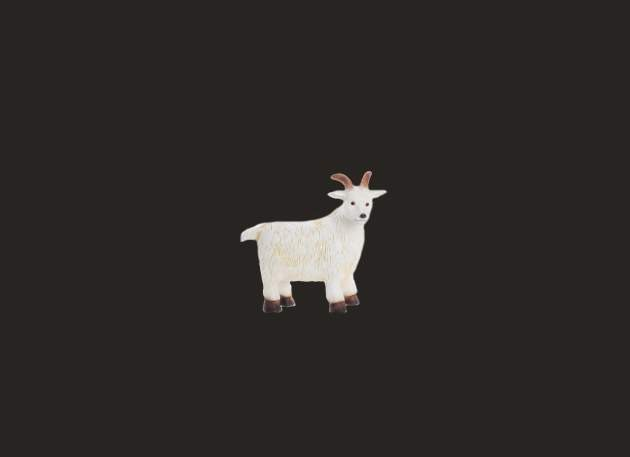 Small White Goat Model