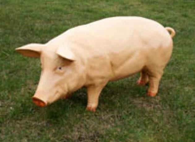 Life Size Model Sow Pig