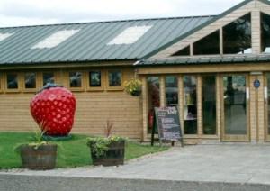 Giant Strawberry Model