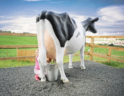 Life Size 3D Model Milking Cow