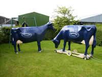 cows standing cogent