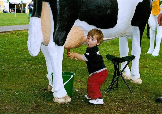 Life Size Model Milking Cow