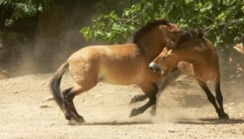 Overfeeding Causes Horse Behavior Problems | Horse-Solutions com