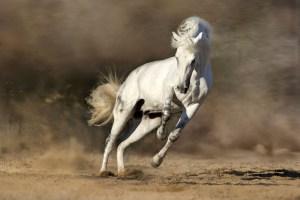 Overfeeding can lead to horse feeling too good